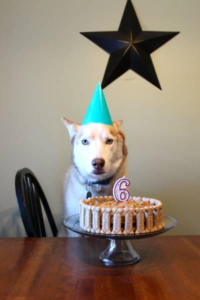 動物達の誕生日の写真の数々!!の画像(13枚目)