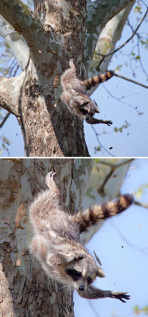 動物たちの面白いの画像(44枚目)
