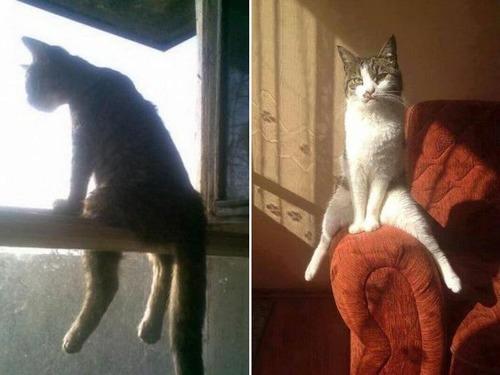 猫が座っているの画像(2枚目)
