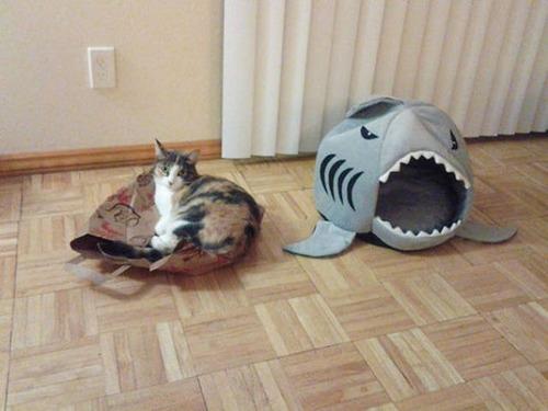 にゃんとも言えない、ちょっと困った猫の画像の数々!!の画像(20枚目)