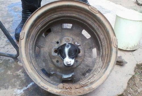 犬はバカ可愛い!!バカだけど憎めない可愛い犬の画像の数々!!の画像(6枚目)
