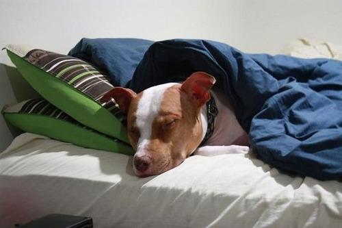 可愛く眠っている動物達の画像(21枚目)