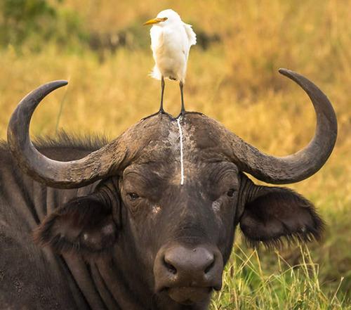 動物たちの面白いの画像(12枚目)