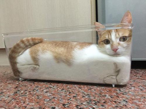 器に入った猫の画像(16枚目)