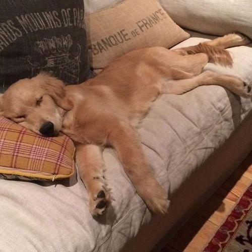 可愛く眠っている動物達の画像(3枚目)