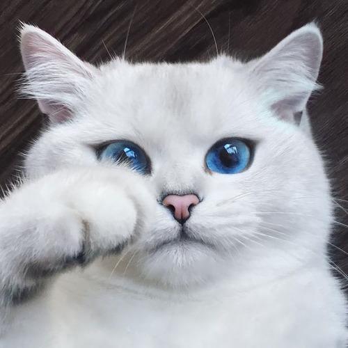 かわい過ぎる猫ちゃんの画像(1枚目)