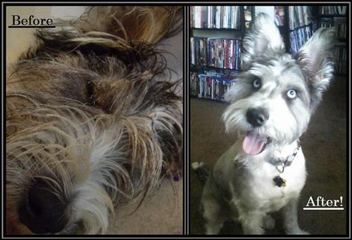 ホッとする!ノラ犬の飼主が見つかるビフォーアフターの比較画像!!の画像(3枚目)