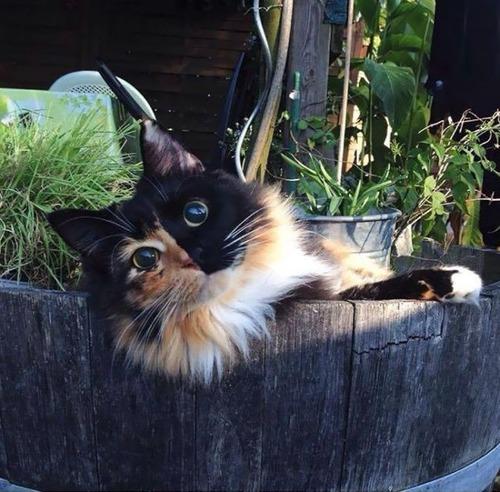 かわい過ぎる猫ちゃんの画像(12枚目)