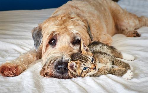 ほのぼのする!仲の良い犬と猫の画像の数々!!の画像(27枚目)