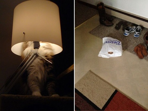 隠れているつもりの猫の画像(15枚目)