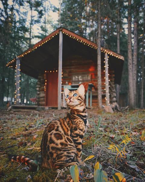 美しい風景と猫の画像(2枚目)