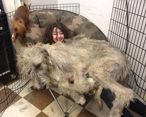 巨大な犬の画像(45枚目)
