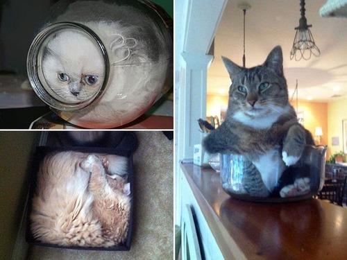 器に入った猫の画像(2枚目)