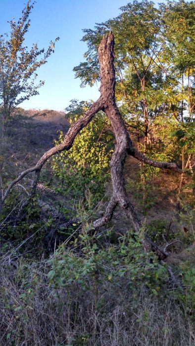 不気味な形の樹木の画像(8枚目)