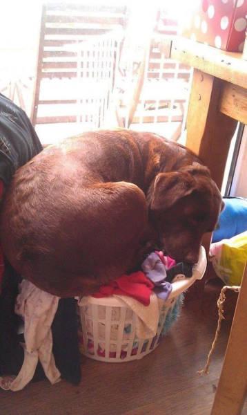 どこでも寝れる!?どこでも寝てる可愛い犬の画像の数々!!の画像(4枚目)