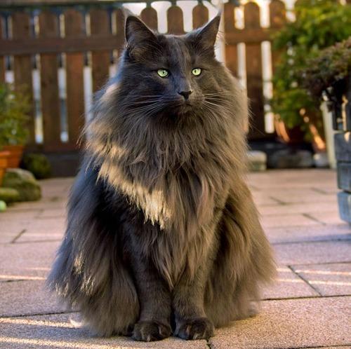 かわい過ぎる猫ちゃんの画像(19枚目)