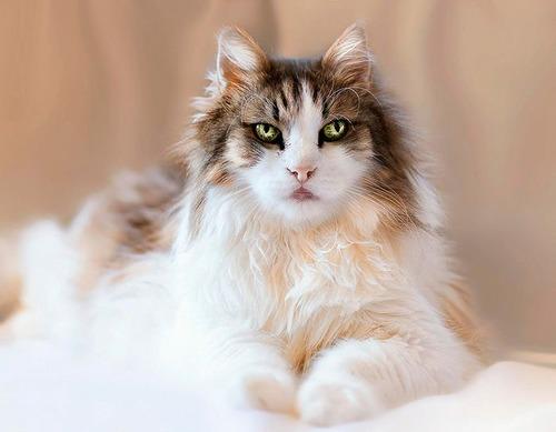かわい過ぎる猫ちゃんの画像(17枚目)