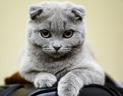 かわい過ぎる猫ちゃんの画像(22枚目)