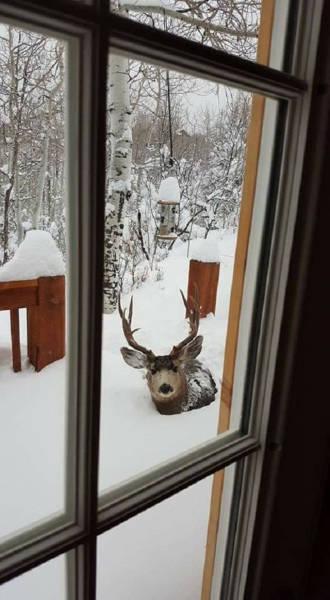 冬を楽しむカナダの人達の画像(36枚目)