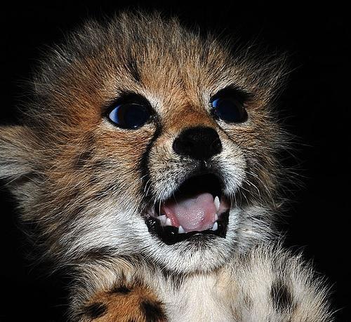 動物の気持ちが読める!何か言いたそうな動物の画像の数々!!の画像(42枚目)
