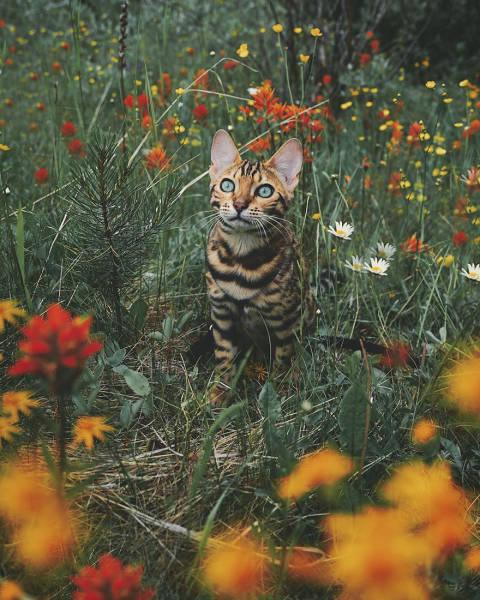 美しい風景と猫の画像(13枚目)