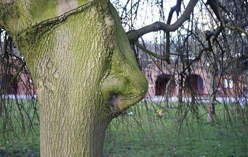 不気味な形の樹木の画像(5枚目)