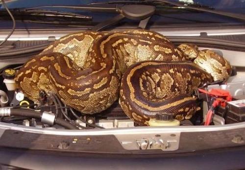 自動車の中に潜んでいる動物達の画像(10枚目)