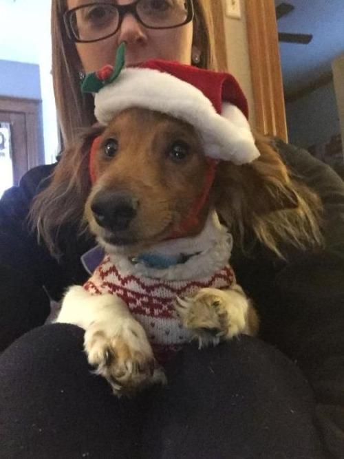 クリスマスのコスプレをした動物達の画像(4枚目)