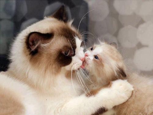 色々な動物の親子の癒される画像の数々!!の画像(11枚目)