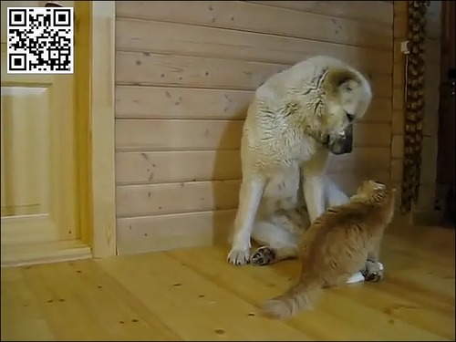 たぶん仲がよい犬と猫ww_000001232