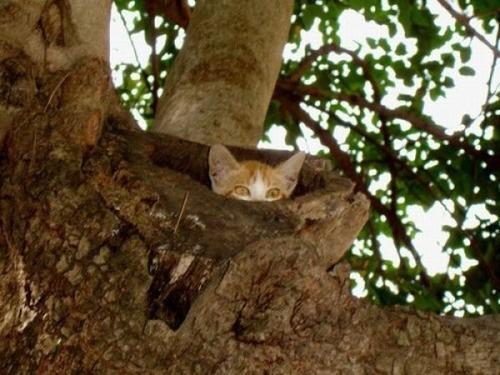 獲物を狙うかわいいネコの画像(10枚目)