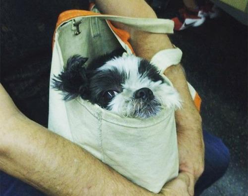 カバンに入れられた犬の画像(5枚目)