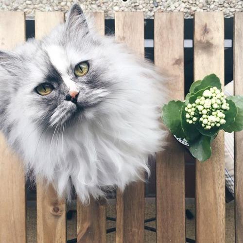 かわい過ぎる猫ちゃんの画像(16枚目)
