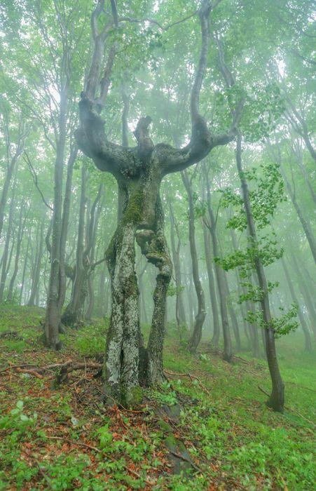不気味な形の樹木の画像(22枚目)
