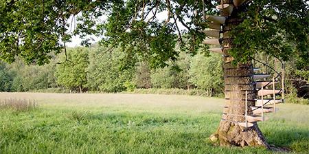 お年寄りでも簡単に木に登れる!木につける階段が面白い!の画像(1枚目)