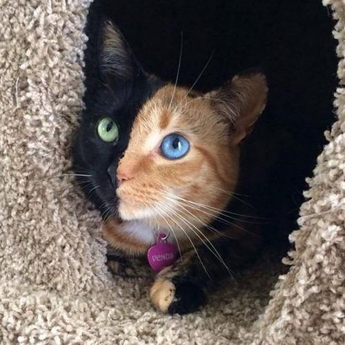 かわい過ぎる猫ちゃんの画像(3枚目)