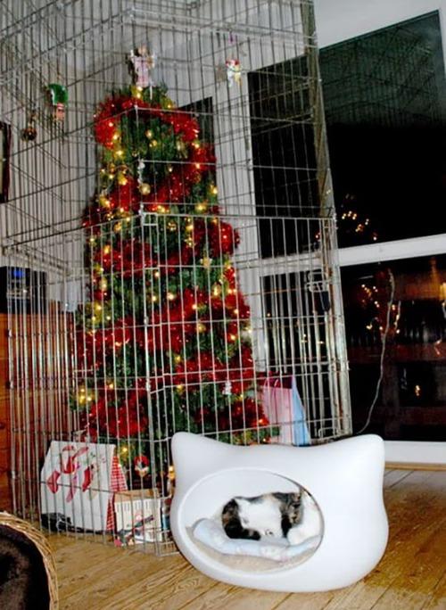 ペットと過ごすクリスマスの画像(29枚目)