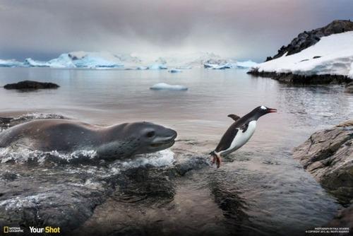 ナショナル ジオグラフィック!2015年で最も印象的だった写真の数々!の画像(14枚目)