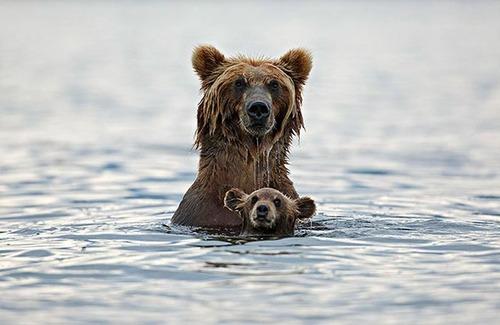 色々な動物の親子の癒される画像の数々!!の画像(7枚目)