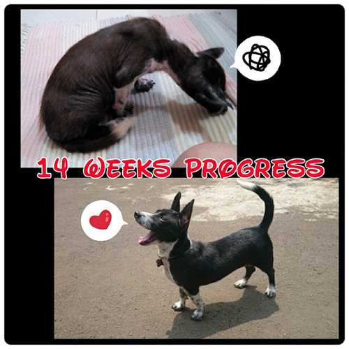 ホッとする!ノラ犬の飼主が見つかるビフォーアフターの比較画像!!の画像(6枚目)