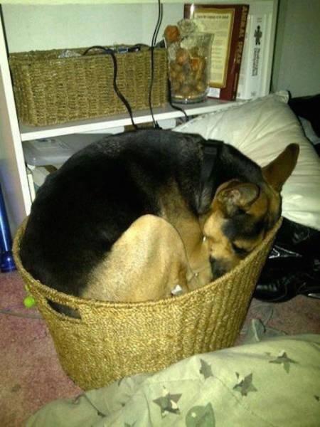 どこでも寝れる!?どこでも寝てる可愛い犬の画像の数々!!の画像(5枚目)