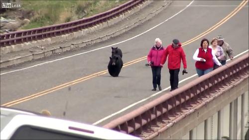 子連れのクマが観光客を追いかける怖すぎる動画…_000001700