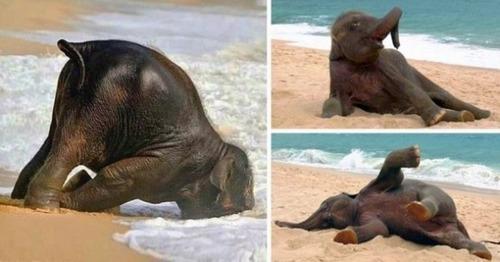 幸せそうな表情の動物達の画像(1枚目)