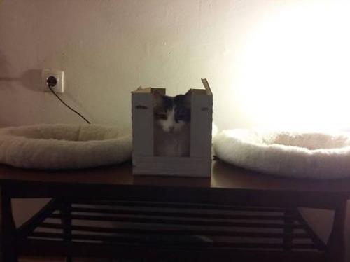 にゃんとも言えない、ちょっと困った猫の画像の数々!!の画像(18枚目)