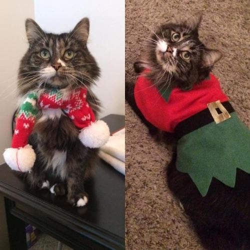 クリスマスのコスプレをした動物達の画像(15枚目)