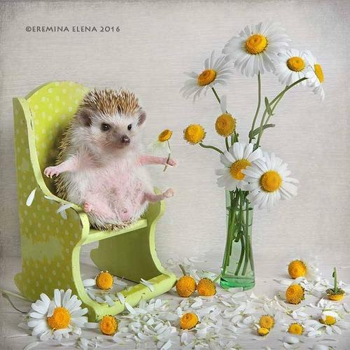 secret_world_of_hedgehogs_09