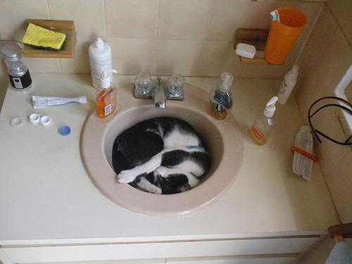 器に入った猫の画像(6枚目)