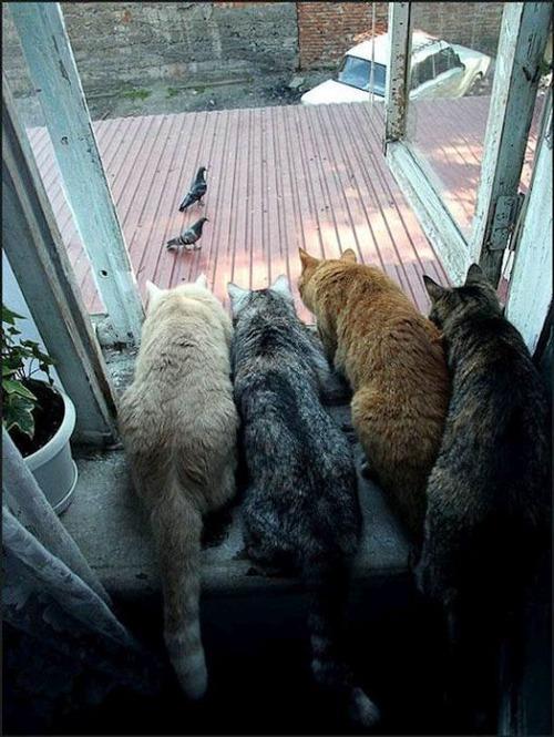 獲物を狙うかわいいネコの画像(20枚目)