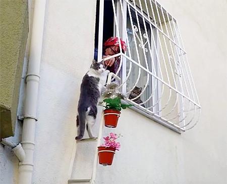 猫ちゃん用の階段の画像(4枚目)