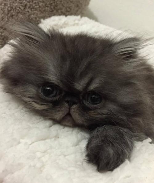 kittens_37